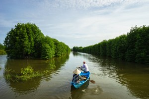 •Mangrove forest with two people in a fishing boat in Ca Mau province, Mekong delta, south of Vietnam