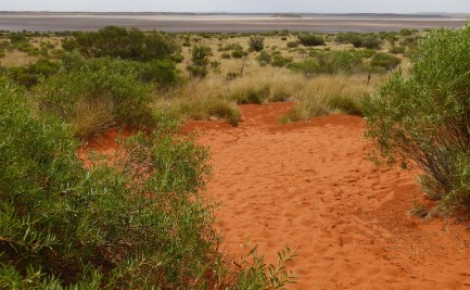 Outback scene with vegetation growing in red sand