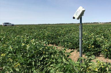 A sensor in a field