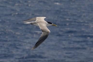 Image of sea bird