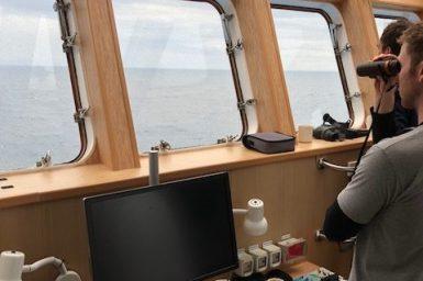 Observing seabirds