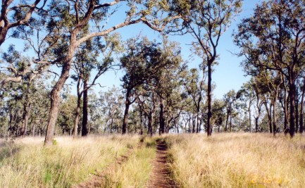 Open woodland in Queensland.