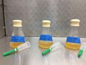 Three glass beakers with yellow fluid inside and blue labels.