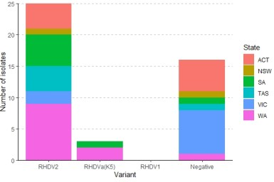 Stacked bar chart showing the number of isolates of each RHDV variant detected during September and October 2020 coloured by state. RHDV2 was the most frequent variant detected in all states. K5 was detected in WA and SA. RHDV1 was not detected. 16 samples were negative for RHDV.