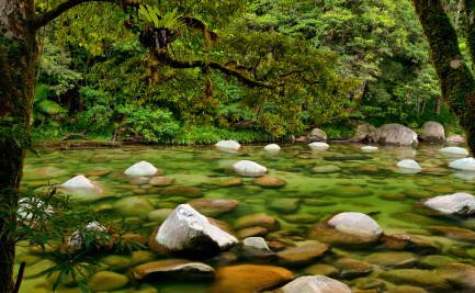 Creek with stones surrounded by forest