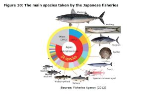 Figure 10: The main species taken by the Japanese fisheries