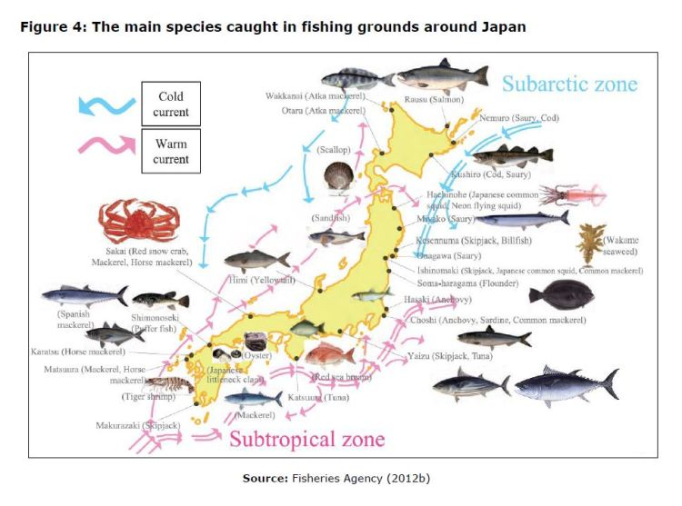 Figure 4: The main species caught in fishing grounds around Japan