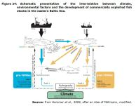 Figure 24: Schematic presentation of the interrelation between climate, environmental factors and the development of commercially exploited fish stocks in the eastern Baltic Sea.