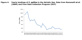 Figure 4: Yearly landings of C. gallina in the Adriatic Sea. Data from Romanelli et al. (2009) and from Data Collection Program (DCF)