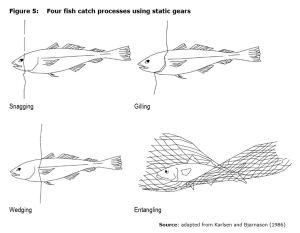 Figure 5: Four fish catch processes using static gears