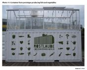 Photo 11: Container farm prototype producing fish and vegetables