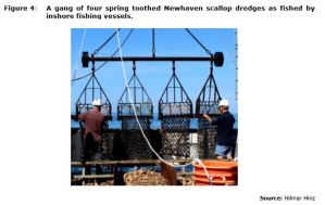 Figure 4: A gang of four spring toothed Newhaven scallop dredges as fished by inshore fishing vessels.