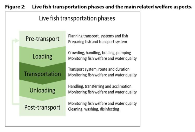Figure 2: Live fish transportation phases and the main related welfare aspects