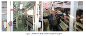 Figure 7. Additional decks with transported sheep