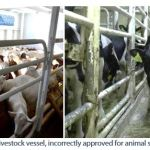 Figure 8. Inadequate livestock vessel, incorrectly approved for animal species or categories