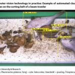 Figure 2: Computer vision technology in practise: Example of automated classification of fish species on the sorting belt of a beam trawler