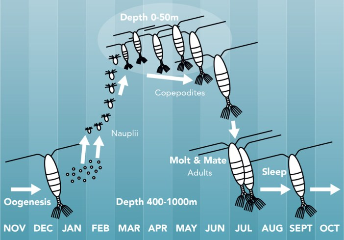 zooplankton climate change