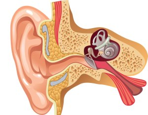 cochlear hpa