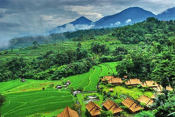 paddie-fields-bali-indonesia