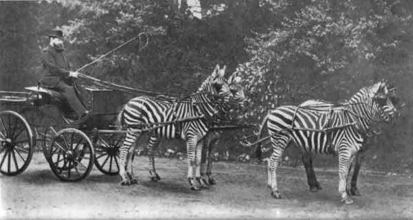 Lord Lionel Walter Rothschild se rend à Buckingam