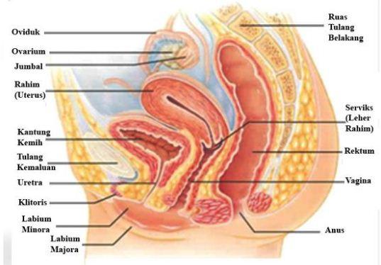 upaya pencegahan penyakit pada sistem reproduksi wanita