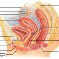 Upaya Pencegahan Penyakit Pada Sistem Reproduksi Manusia
