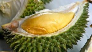 Durian Bokor