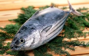 ikan-tuna