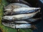 Memilih, Menyimpan & Mengolah Ikan Pindang