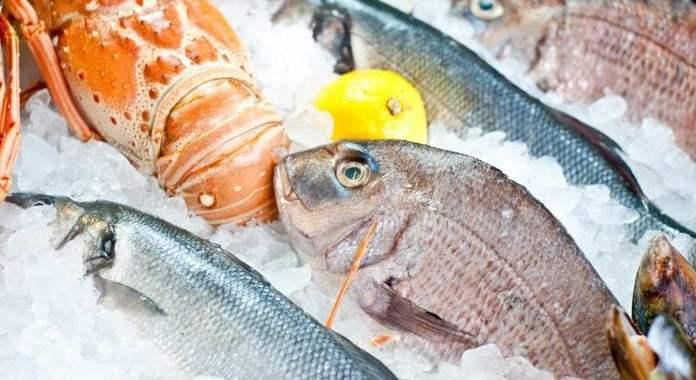 Kenali Perbedaan Penting Ikan Air Tawar dan Ikan Laut