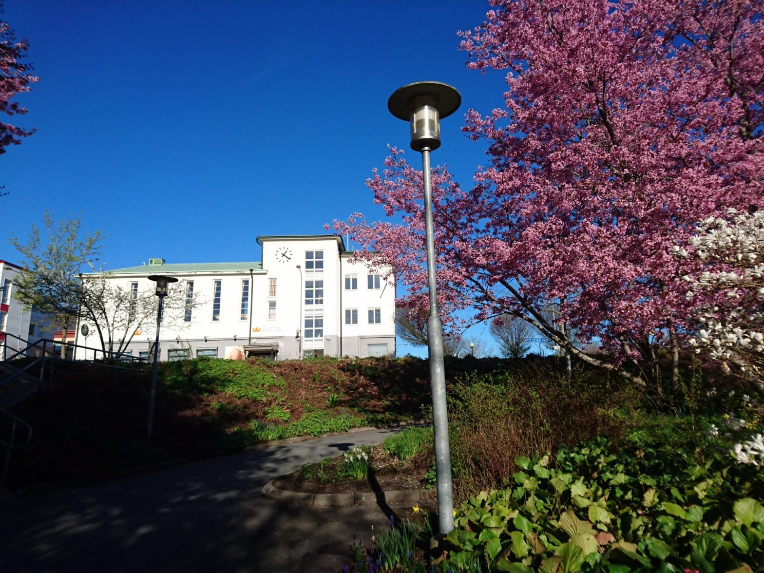 Blommande körsbärsträd och magnolior vid gamla Sävsjö stadshotell