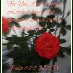 God's Abundant Mercy