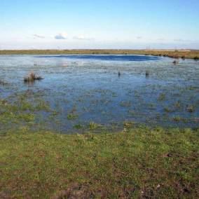 Prairie naturelle humide