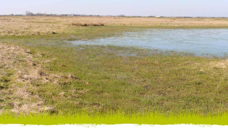 Belle et baisse dans la Réserve naturelle régionale du Marais de la Vacherie