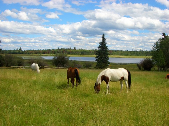 ranch,Cariboo,horses,horseback riding,Canada,guest ranch,Chrome Heart Ranch