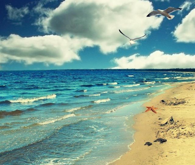 Seagulls On The Beach Wallpaper