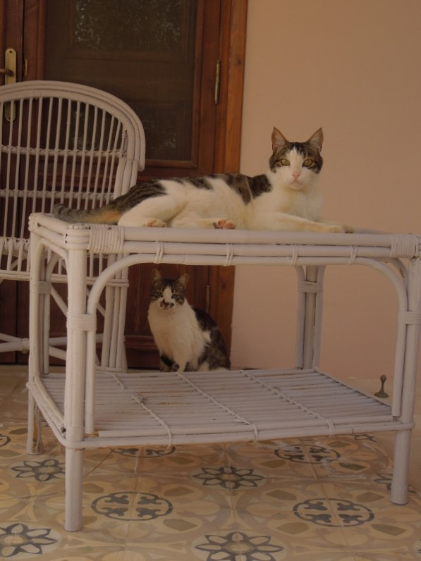 Two other residents of Residence Arabesque