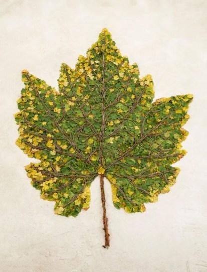 OEUVRES_Chardonnay-Leaf