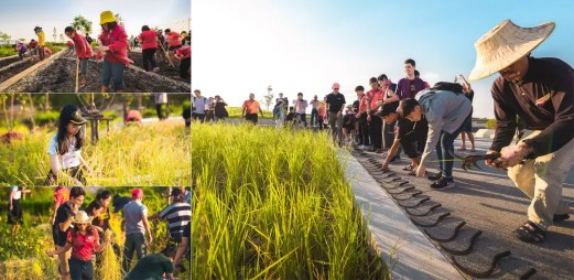landprocess-urban-rooftop-farm-bangkok-58759-preview_low