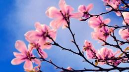 spring NALS