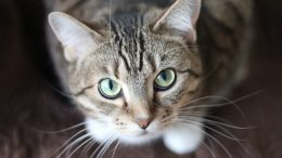 Help to Become the Purrfect Landlord
