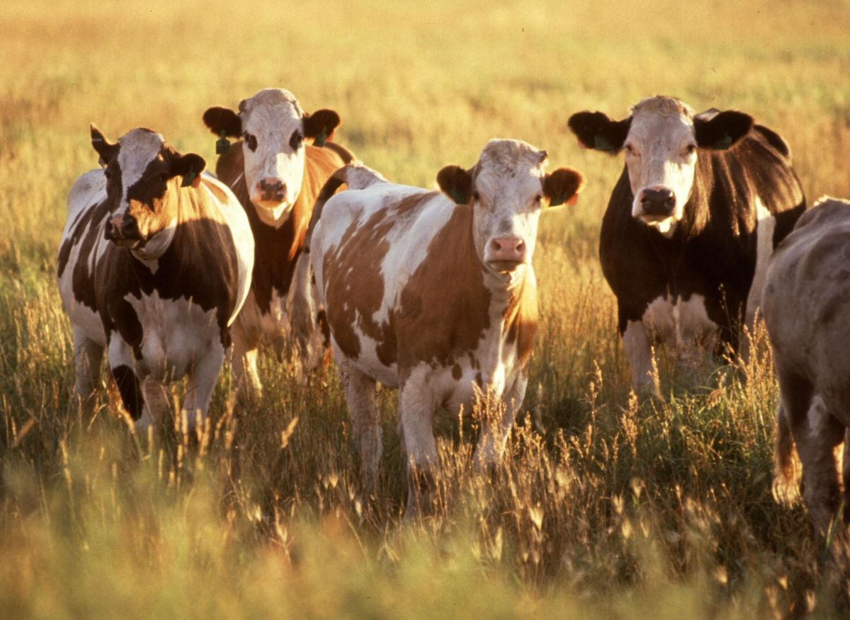 US will not resume Brazil beef imports until food safety addressed