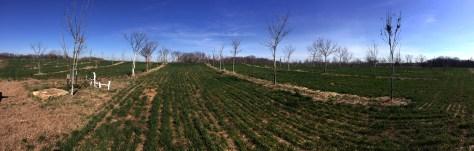 Bill Stouffer – Agroforesterie en grand culture - https://resilientagriculture.wordpress.com/2017/03/20/bill-stouffer-agroforesterie-en-grand-culture/