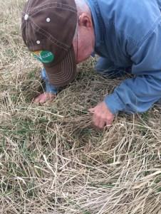 Doc Kinkead est un éleveur sans troupeau qui pratique le pâturage tournant https://resilientagriculture.files.wordpress.com/2017/03/22.jpg?w=450depuis plus de 10 ans.