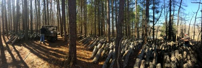Ozark Forest Mushroom : production de Shiitake sur bûches https://resilientagriculture.wordpress.com/agroforestry/agroforestry-2/