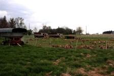 Poules pondeuses en rotation sur pâtures. Des investissements limités pour une activité très lucrative. https://resilientagriculture.wordpress.com/2017/05/13/three-brothers-farm-poule-pondeuse-en-rotation-sur-pature/