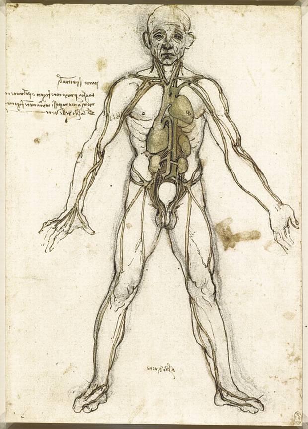 Leonardo Da Vinci'nin bir anatomi çizimi;