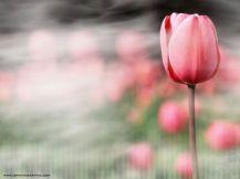 flower_114
