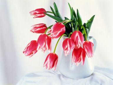 Tulip-Bowl-1