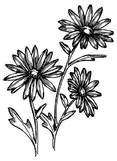 How To Draw A Daisy Howstuffworks